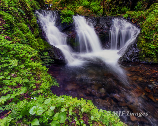 A small falls along Gorton Creek in Oregon's Columbia River Gorge.