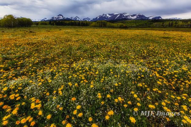 Springtime in East Glacier, Montana
