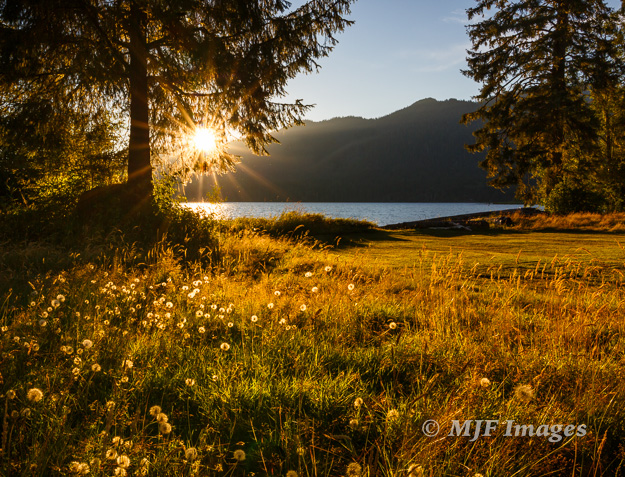 The grassy shore of Lake Quinalt on Washington's Olympic Peninsula is perfect for a sunset stroll.