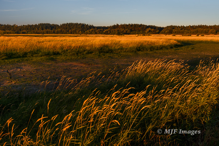 Sunset at Ridgefield National Wildlife Refuge in SW Washington.  Hand-held, 30 mm., 1/40 sec. @ f/11, ISO 400.