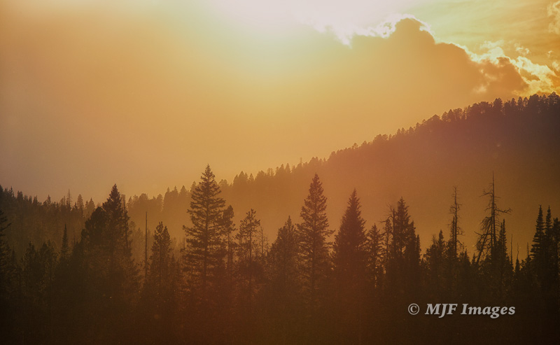 Fog over the Forest, Rocky Mtn. foothills, Montana.