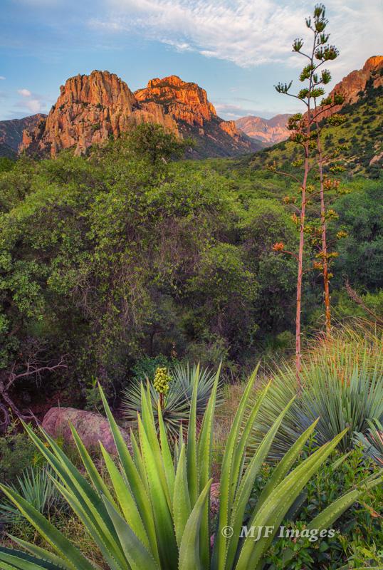 Morning breaks over Cave Creek Canyon, Chiricahua Mountains, Arizona.