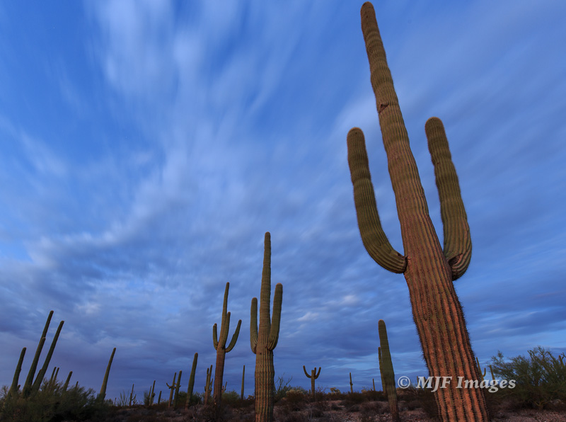 Evening falls along the U.S. - Mexican border in southern Arizona. Time to travel!