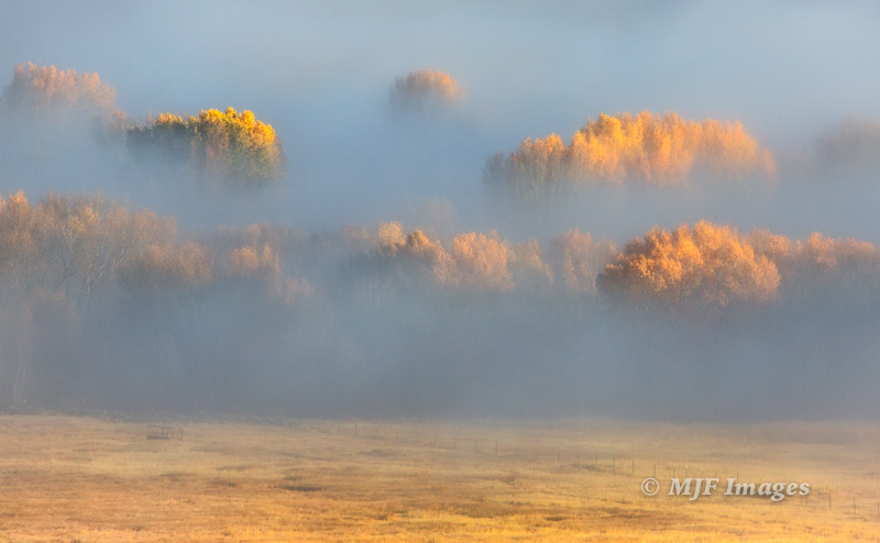 Cottonwoods dressed for autumn peek out of a fog bank along the upper Colorado River in northern Colorado.