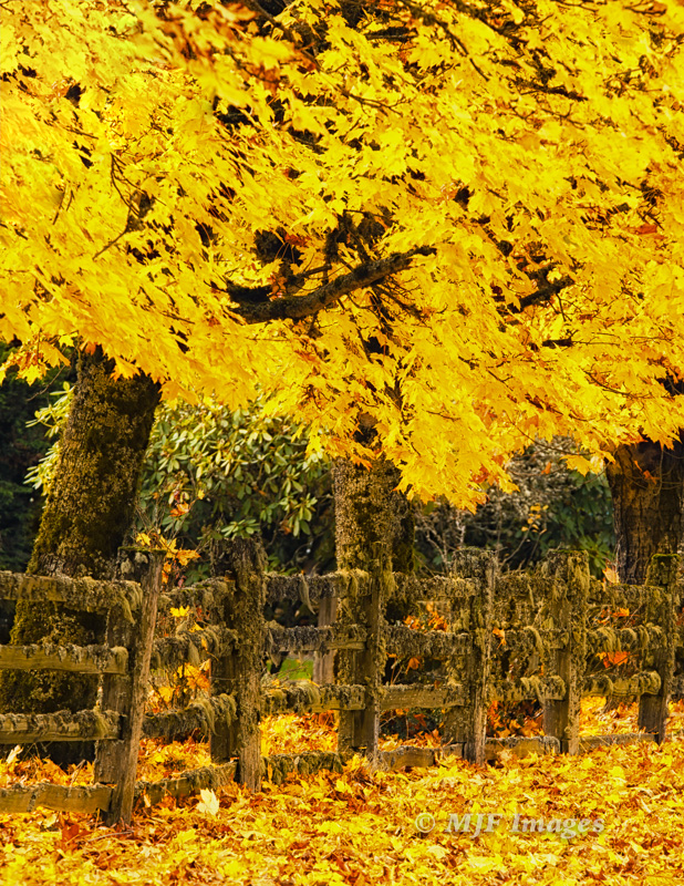 Fall colors in rural Oregon, captured at 200 mm.