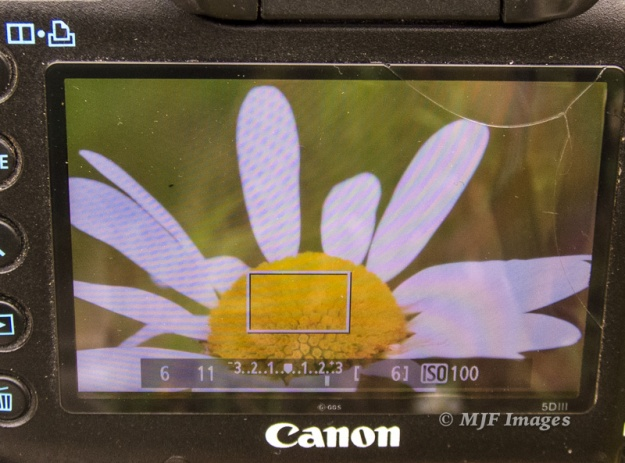 Here I'm pressing my DOF preview button to see what f/11 actually looks like. The petals in rear are in better focus than the LiveView image above shows.