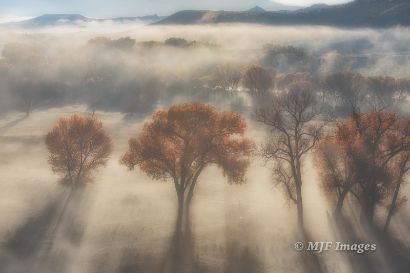 A recent image that made it onto my new website.  Colorado River bottom in fog, Colo.