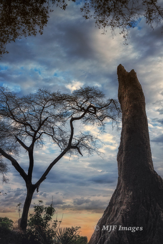 The Okavango Delta in Botswana doesn't have termite mounds, it has termite towers!
