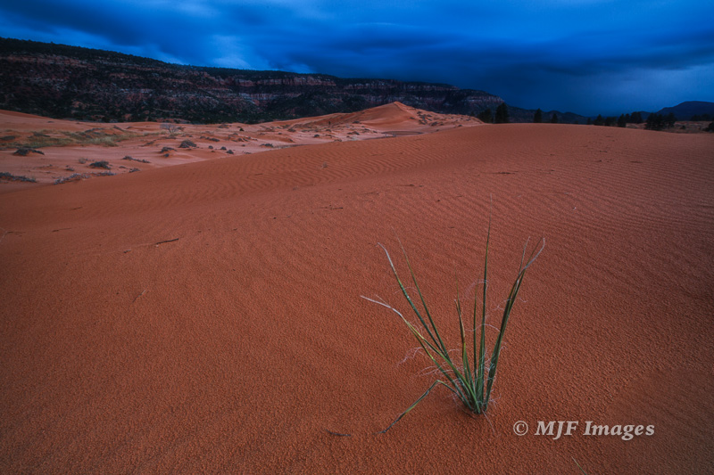 An approaching winter storm at Coral Pink Sand Dunes, Utah.