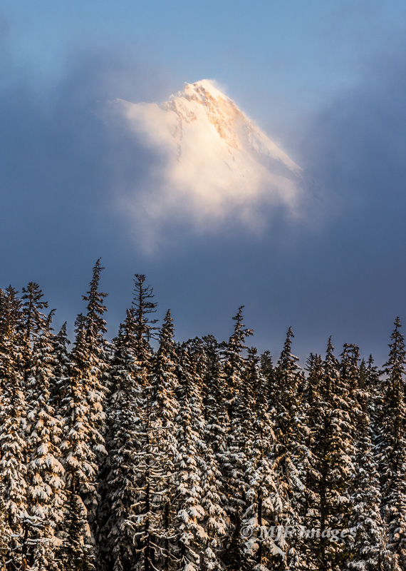 Mount Hood, Oregon sports a fresh coat of snow as it rises above its surrounding forest.