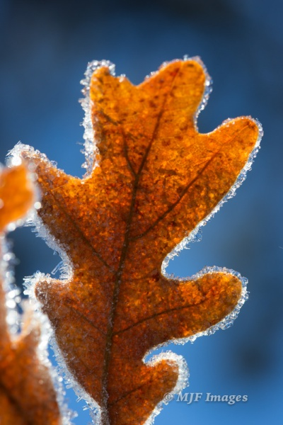 Frozen dew at the end of autumn, Zion National Park.