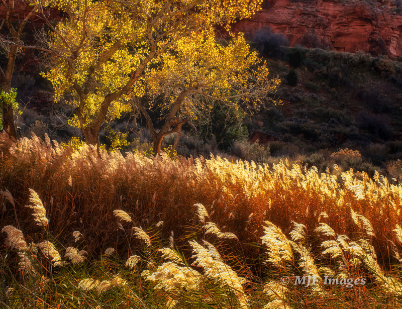 A fall scene along the Pine Creek canyon bottom, Zion N.P.