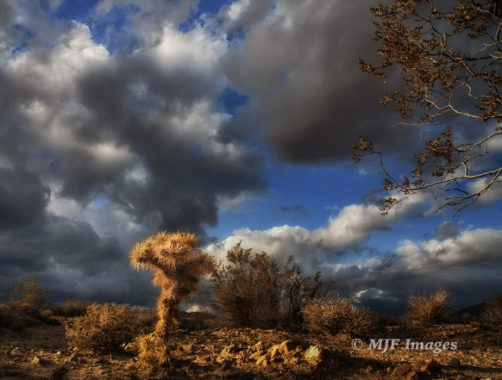 Dramatic skies plus a polarizer make for a nice chance to shoot from a low point of view in the Nevada desert.