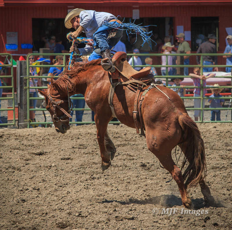 A bronco throws a panter, I mean a buckaroo! Small-town rodeo, eastern Oregon.