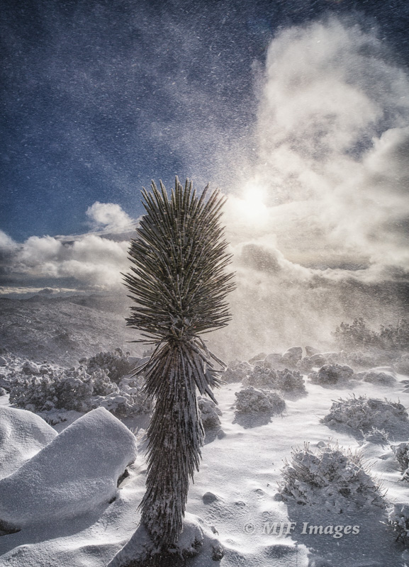 The tail end of a rare snowstorm in the desert of Joshua Tree National Park offered the chance to shoot the bluster and spindrift.