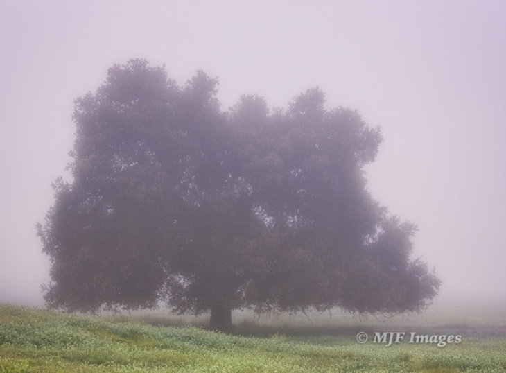 Because of low-contrast, it can be tough to use auto-focus in foggy conditions. Shot this morning.