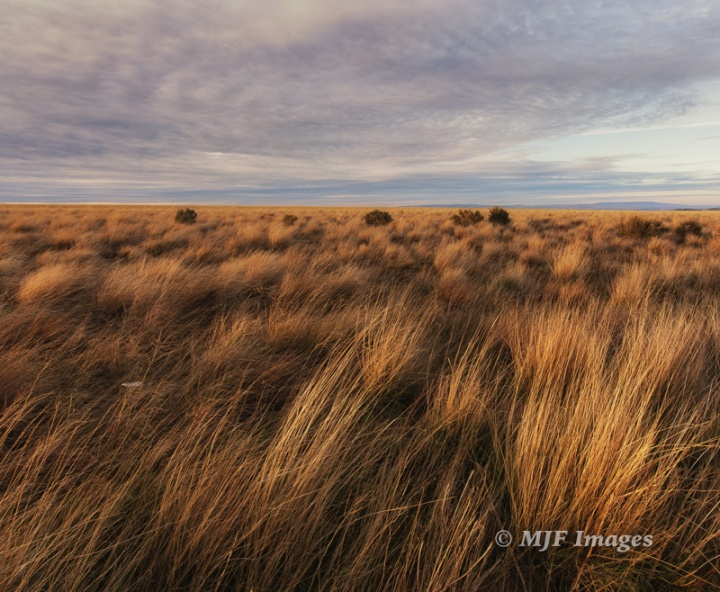 The bunchgrass steppe.