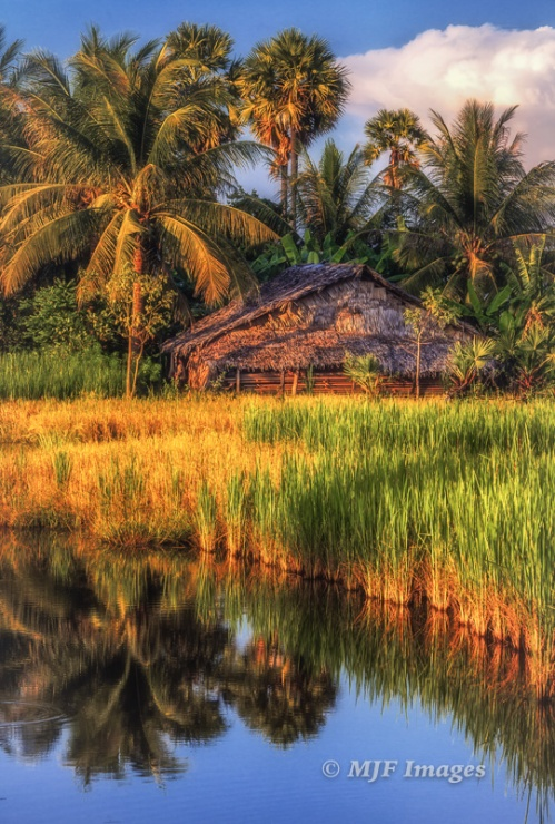 A traditional home in west-central Cambodia, shot from the edge of the rice paddy about a hundred feet away.