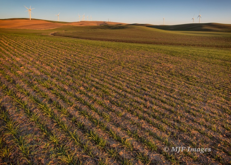 A very simple shot of wind turbines in the Palouse, Washington.  16 mm., 1/40 sec. @ f/13, ISO 400, handheld.