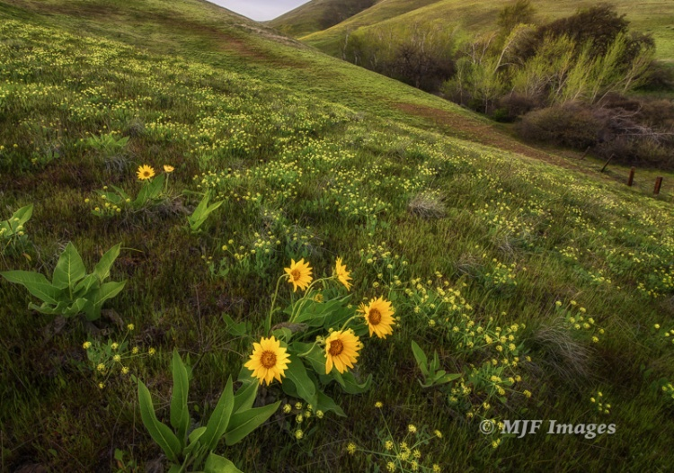 Recent shot in Washington's Columbia Hills in the eastern Columbia Gorge.  Borders on a large landscape, the bit of sky and close-focus on the flowers giving it depth.