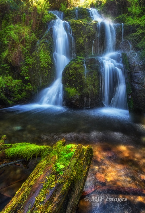 I visited this little waterfall near Lake Quinault, Washington this week. A mossy log forms a partial leading line in the foreground.