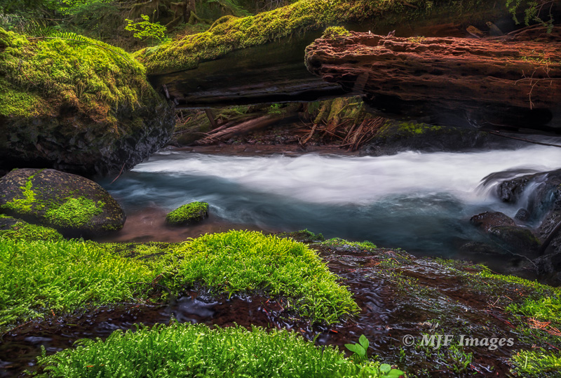 Springtime on Alec Creek: Gifford Pinchot National Forest, Washington.