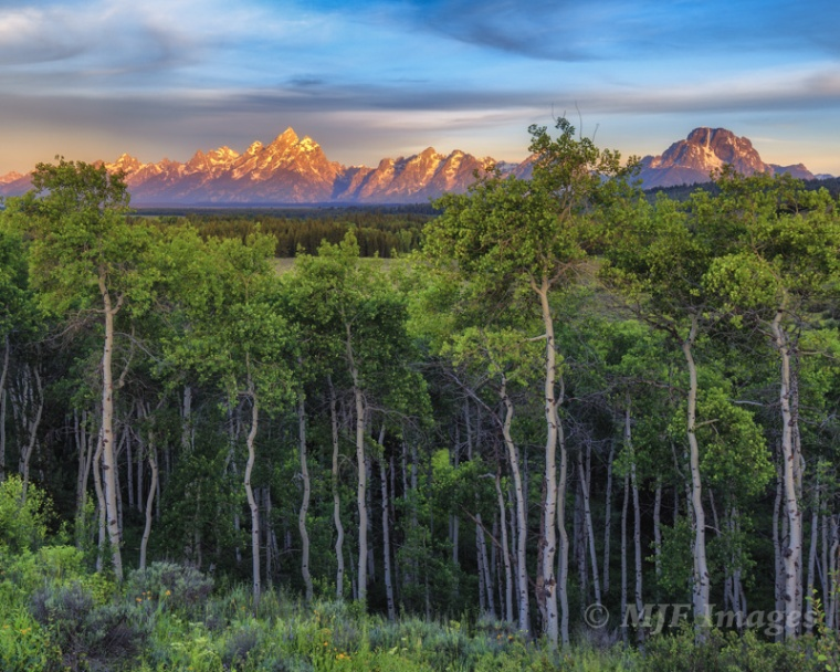 Pre-visualizing aspens in front of the Grand Tetons for most has them in fall colors, but spring green and their exposed trunks meant visualizing something different.