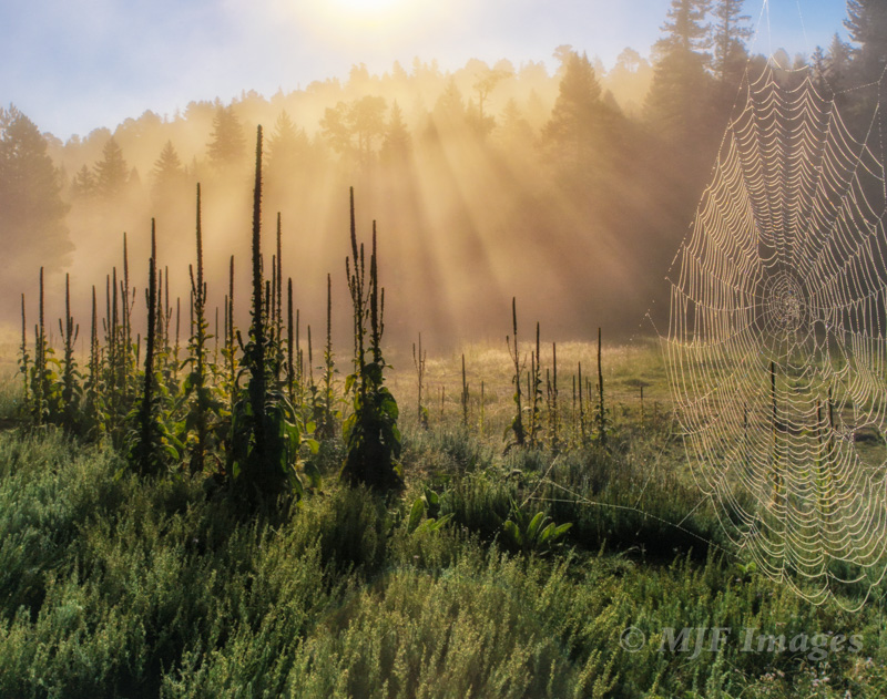 This image was the result of waking up just after sunrise and while still sleepy walking into a fog-suffused meadow in the Sangre de Cristo Mtns., New Mexico, visualizing an image that would capture that mood.