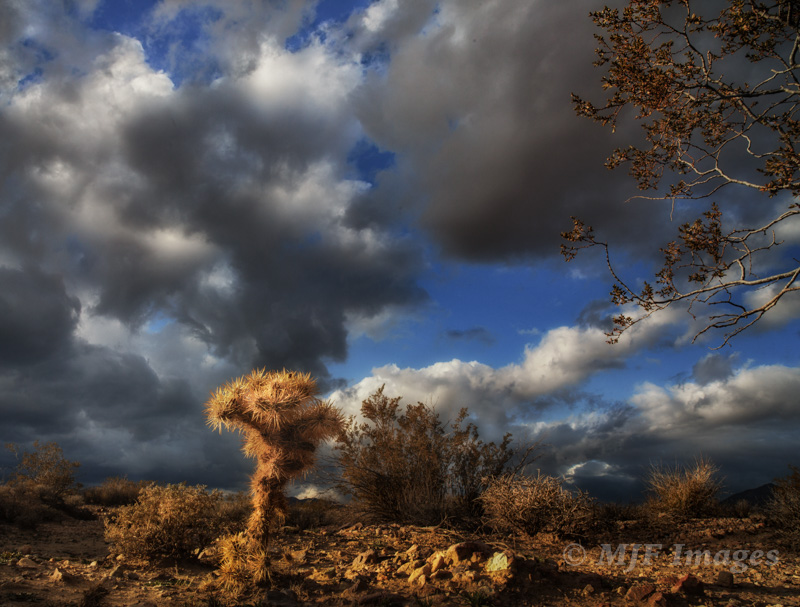 This small cholla cactus I wanted to highlight against the stormy sky of Death Valley, California.  So I used a very low POV, a foot or two above the ground.