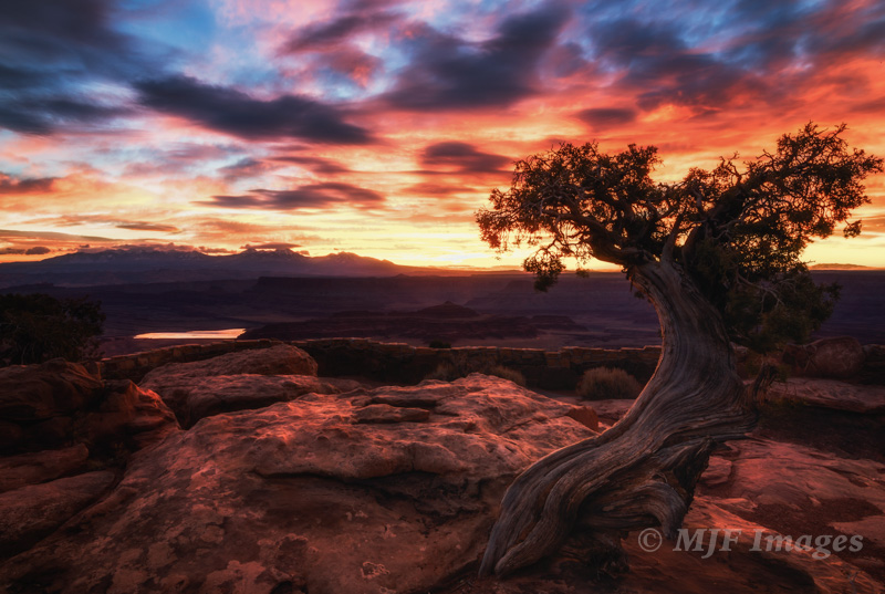 At Deadhorse Point, Utah, a popular spot, I arrived pre-dawn & was able to shoot this gnarled juniper while another photog. who arrived after me circled around with his little flashlight.