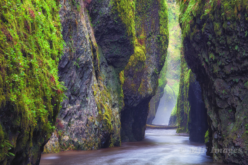 Green Oneonta Gorge, Oregon