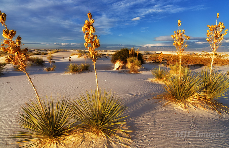 Early morning at White Sands, New Mexico.