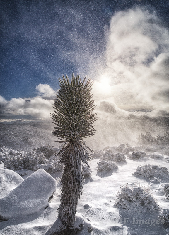 Wind and snow create spindrift after a rare snowfall at Joshua Tree National Park, California.
